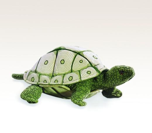 Schildkröte - Grüne Schlidkröte (FOLKMANIS)
